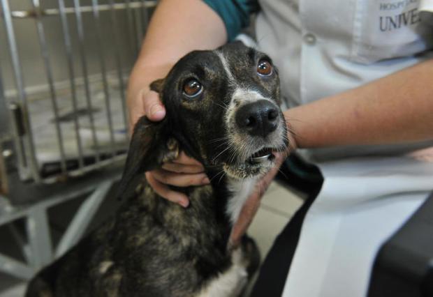 Ibama deve notificar a UFSM em caso de pesquisa com cães Jean Pimentel/Agencia RBS