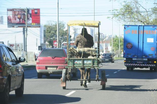 Lei que retira carroças das ruas da Capital começa a valer no domingo Ronaldo Bernardi/Agencia RBS
