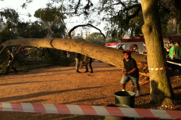 Queda de árvore na Redenção mata uma pessoa e fere outras duas FêCris Vasconcellos/Agencia RBS