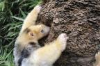 Zoológicos gaúchos preparam animais para o inverno Renan Stadler/Divulgação Gramadozoo