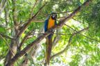 Arara foge de zoo e vai parar em universidade de São Leopoldo Rodrigo Blum/Divulgação