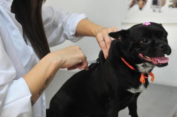 Centro de Saúde Veterinária realiza ação comunitária para animais Jean Pimentel/Agencia RBS