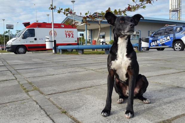 Morre cachorro que esperava há três anos pelo dono em pátio de hospital Luiz Carlos Souza/Especial
