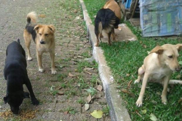 Moradores de Gravataí denunciam mortes de cães por envenenamento Divulgação/Arquivo Pessoal
