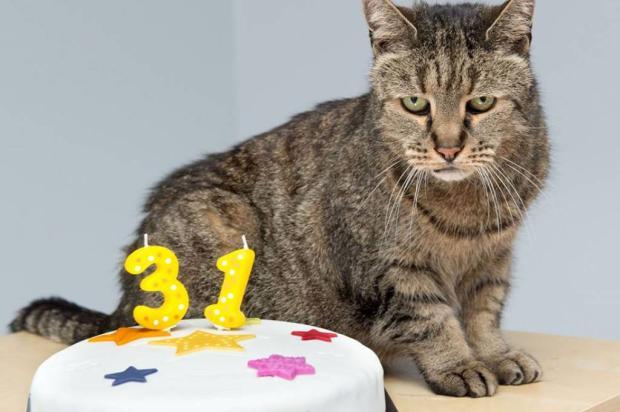 Este bichano de 31 anos pode ser o gato mais velho do mundo Reprodução / Westway Veterinary Group/Westway Veterinary Group