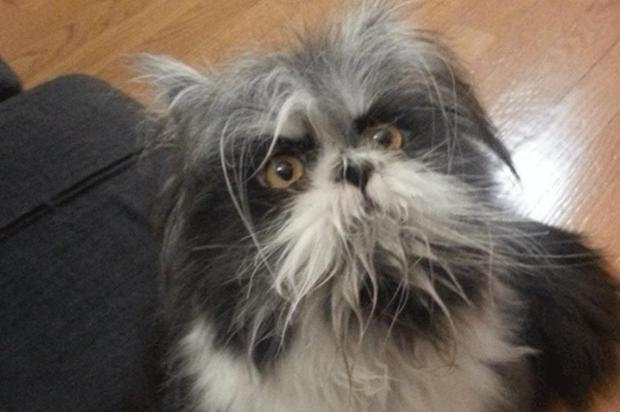 Cachorro ou gato? Foto publicada em rede social deixa os internautas em dúvida Twitter/Reprodução