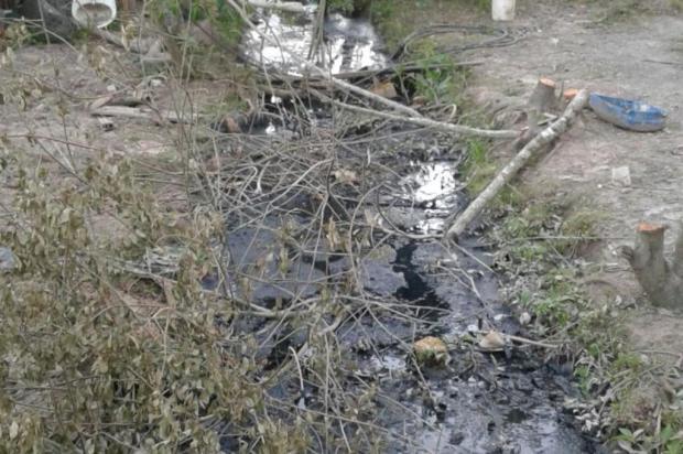 Égua precisou ser sacrificada em Nova Santa Rita após cair em valo que deveria ter sido fechado pela prefeitura Leitor DG/Arquivo Pessoal