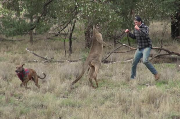Homem que deu soco em canguru para defender cachorro é criticado nas redes sociais Reprodução / Youtube/Youtube