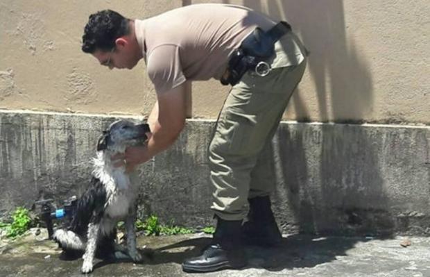 Cão é socorrido por PMs após desmaiar com calor em Joinville Reprodução / Facebook/Facebook