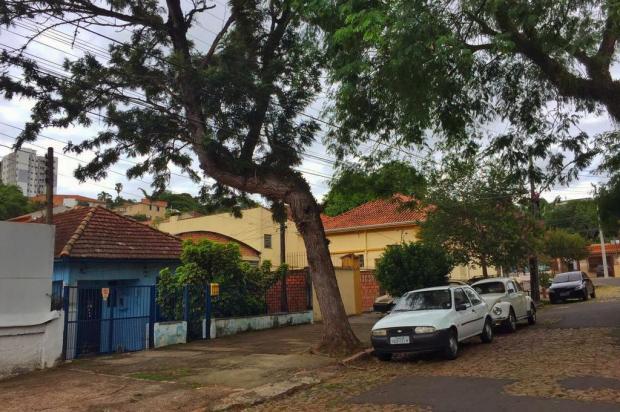Moradores de Porto Alegre aguardam há dois anos por corte de árvore que representa perigo Bárbara Müller/Agência RBS