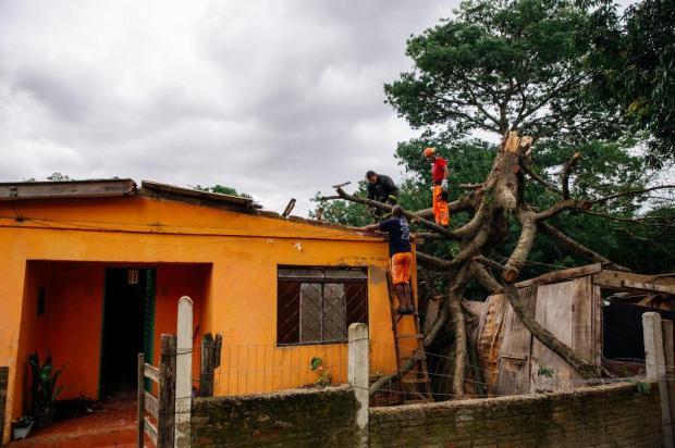 Desde a noite de Natal, moradora de Viamão aguarda retirada de árvore que caiu sobre sua casa Omar Freitas/Agencia RBS