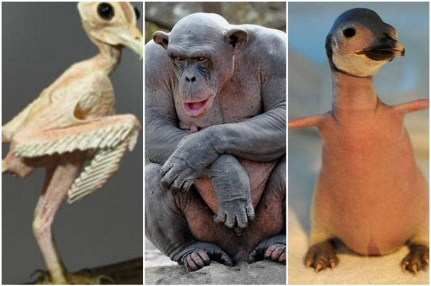 Estas fotos de animais sem penas ou pelos vão deixar você chocado Arte / Reprodução/Reprodução