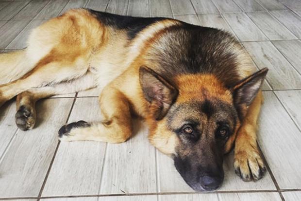 Cachorro morre ao tentar defender dono durante assalto Arquivo Pessoal/