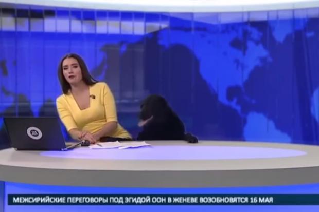 VÍDEO: apresentadora é surpreendida por cão durante telejornal Reprodução / YouTube/YouTube