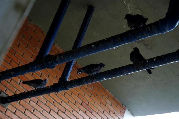 Escola invadida por pombos está com aulas suspensas na Capital Mateus Bruxel/Agencia RBS