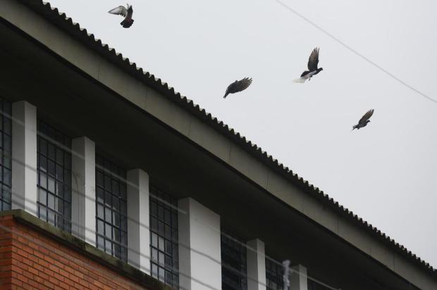 Depois de um mês sem aulas por infestação de pombos, escola retoma atividades nesta quinta-feira Mateus Bruxel/Agencia RBS