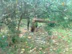 Corte de árvores no Parque Chico Mendes intriga moradores na Zona Norte da Capital Arquivo Pessoal / Leitor/DG/Leitor/DG