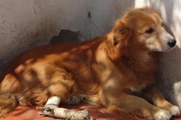 Cachorro precisa de ajuda para voltar a andar Arquivo Pessoal / Leitor/DG/Leitor/DG