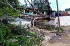 Árvore que caiu no temporal de domingo continua trancando rua em Porto Alegre Arquivo Pessoal / Leitor/DG/Leitor/DG