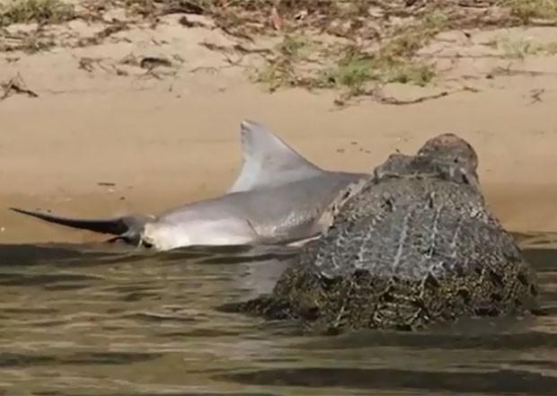 Pela primeira vez cientistas flagram briga entre jacaré e tubarão YouTube/Epic Wildlife / Reprodução/Reprodução