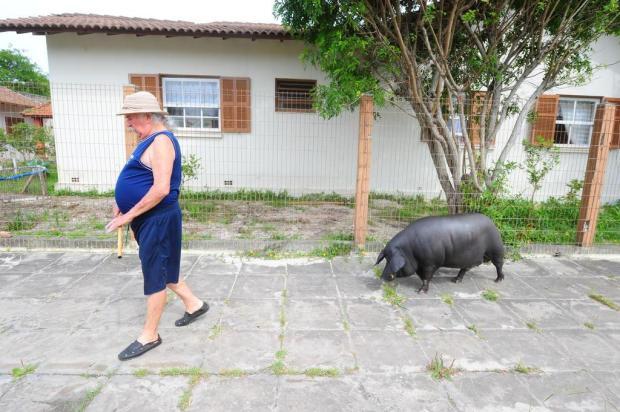 O porco Amarildo faz sucesso em Tramandaí Lauro Alves/Agencia RBS