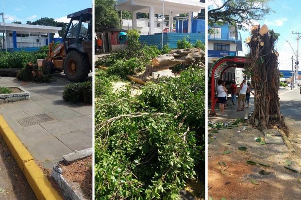 Prefeitura de Viamão derruba 17 árvores em praça da cidade e revolta moradores Arquivo Pessoal / Leitor/DG/Leitor/DG