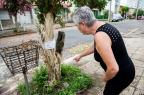Moradores de bairro da Capital não sabem a quem recorrer para retirada de abelhas em árvore na calçada Omar Freitas / Agência RBS/Agência RBS
