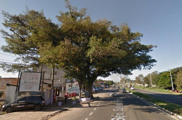 Figueira centenária será removida para criação de faixa de ônibus em Viamão Google Maps / Reprodução/Reprodução