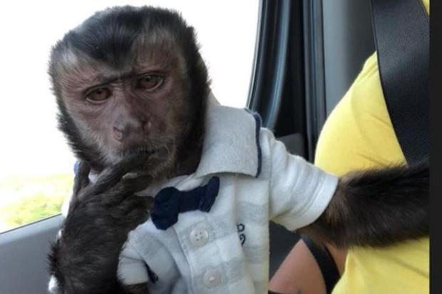 Latino adota novo animal de estimação após a morte do macaco Twelves Instagram/Reprodução
