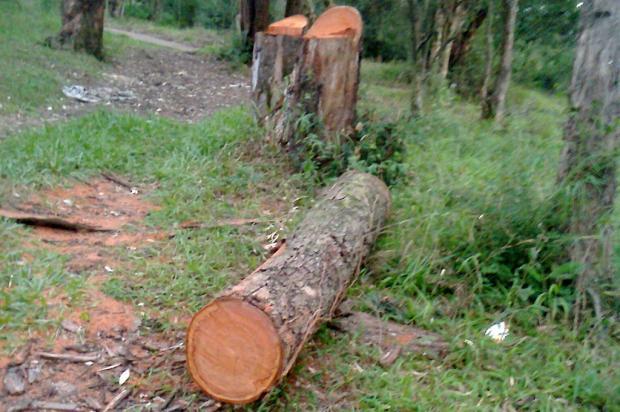 Novo corte de árvores no Parque Chico Mendes preocupa frequentadores, em Porto Alegre Arquivo Pessoal / Leitor/DG/Leitor/DG