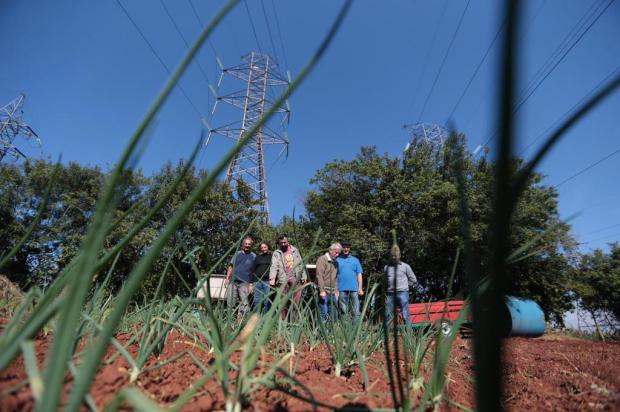 Projeto transforma áreas próximas a torres de alta tensão em hortas Fernando Gomes/Agencia RBS