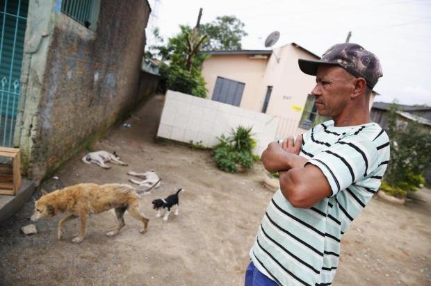 Justiça manda prefeitura de Alvorada diminuir número de animais nas ruas Camila Domingues/Agencia RBS