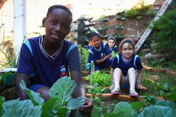Alunos de Gravataí mantêm horta no pátio da escola e produtos são usados na merenda Isadora Neumann/Agencia RBS