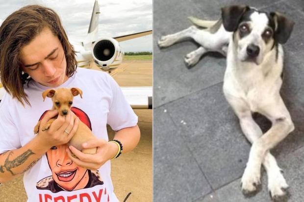 """Youtuber Whindersson Nunes é acusado de """"defender"""" supermercado em caso de cão morto Colagem/Reprodução"""