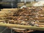 Pescadores dão o pontapé inicial na 239ª Feira do Peixe da Capital Alberi Neto/Agência RBS