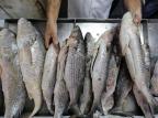 VÍDEO: como acertar na compra do peixe para a Sexta-feira Santa André Ávila/Agencia RBS