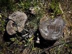"""""""Nada é feitona mão grande"""", diz secretário de Meio Ambiente de Guaíba sobre corte de árvores na cidade Mateus Bruxel/Agencia RBS"""