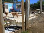Com saída de moradores para construção da nova ponte, animais são abandonados na Ilha dos Marinheiros Tadeu Vilani/Agencia RBS