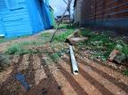 Idosa morre após sofrer choque elétrico tentando salvar cachorros em Guaíba Isadora Neumann/Agencia RBS