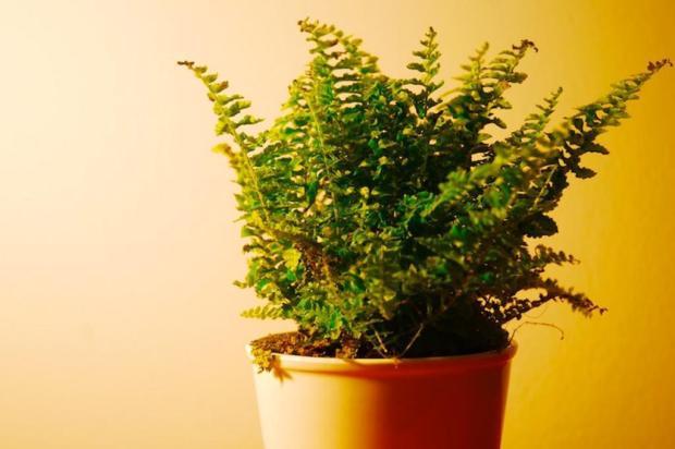 Saiba quais são as melhores plantas para se ter em casa Divulgação/Stock XCHNG
