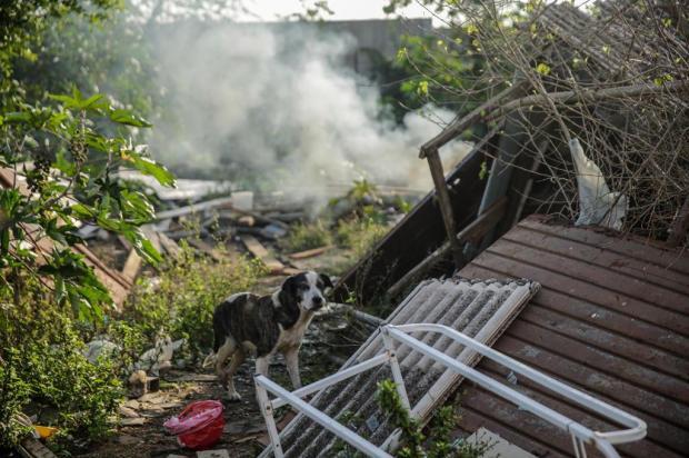 Transferência de famílias da Vila Nazaré aumenta número de animais abandonados na comunidade Marco Favero/Agencia RBS
