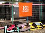 ONG que cuida de mais de 300 cães abandonados em Viamão tem sede atacada por ladrões Aline Vieira/Arquivo Pessoal