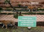 Fechado há oito meses, zoológico de Sapucaia volta a receber visitantes Mateus Bruxel/Agencia RBS