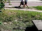 Jacarés provocam alvoroço em bairro de Guaíba André Ávila/Agencia RBS
