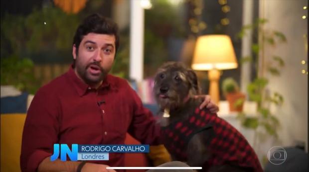 Biriba, cão de correspondente da Globo em Londres, participa de matéria e fica famoso no Twitter; veja o vídeo Reprodução / Twitter/Twitter