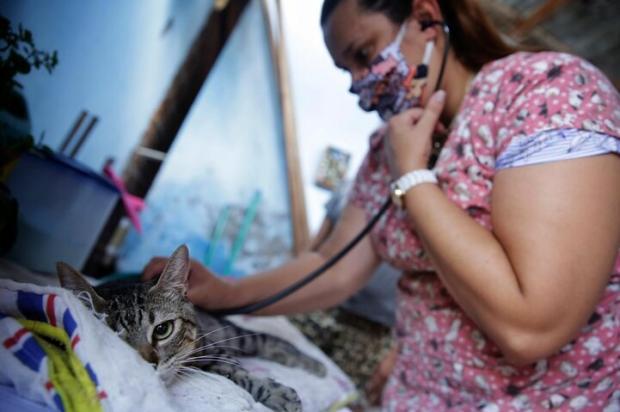 Criado há um ano, Samu veterinário atendeu mais de 800 cães e gatos em Esteio Mateus Bruxel / Agencia RBS/Agencia RBS