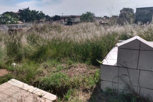 Em Sapucaia do Sul, matagal toma conta de cemitério Arquivo Pessoal / Arquivo Pessoal/Arquivo Pessoal