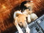 Agentes resgatam 13 cães que viviam trancados em peça no centro de Porto Alegre Patram / Divulgação/Divulgação
