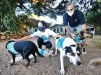 ONG treina cães de rua para tratamento terapêutico com idosos e internos em casas de acolhimento de Porto Alegre Lauro Alves / Agencia RBS/Agencia RBS
