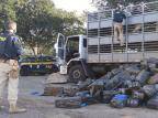 Uso de tecnologia e troca de informações: como as polícias gaúchas estão trabalhando no combate ao tráfico de drogas Divulgação PRF-RS / ResourceSpace/ResourceSpace